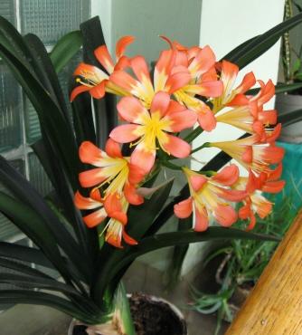 Стихи о растениях для дошкольников