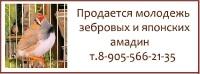 Продается молодежь зебровых и японских амадин